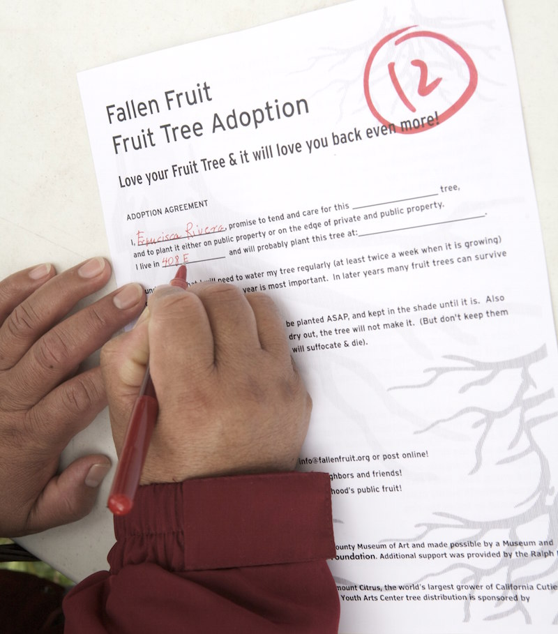 Public Fruit Tree adoptions3 800