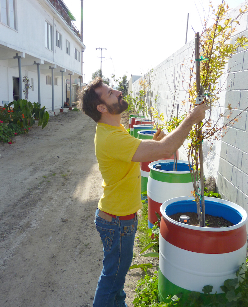 tijuana2 800 Fruta Urbana_mexico
